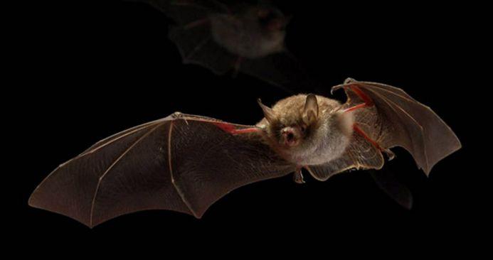 全球首套!昕诺飞为荷兰小镇安装蝙蝠友好型路灯微特电机